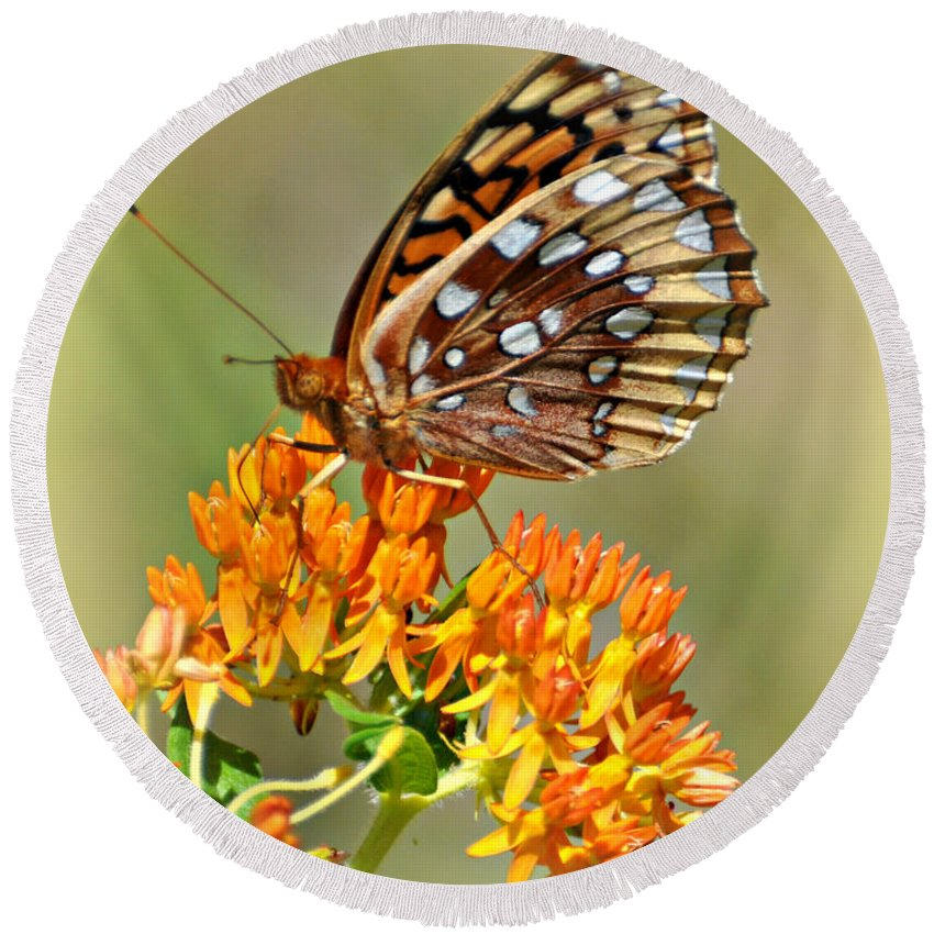 Butterfly Round Beach Towel featuring the photograph Butterfly Weed 1 by Marty Koch