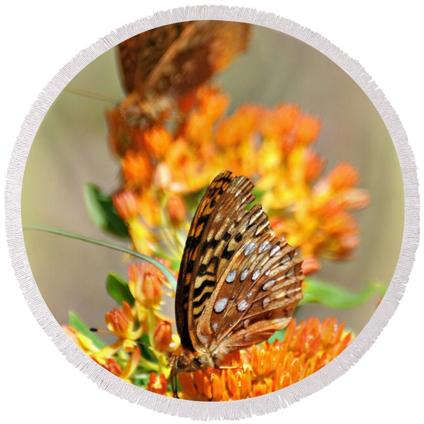 Butterfly Round Beach Towel featuring the photograph Butterfly Weed 2 by Marty Koch