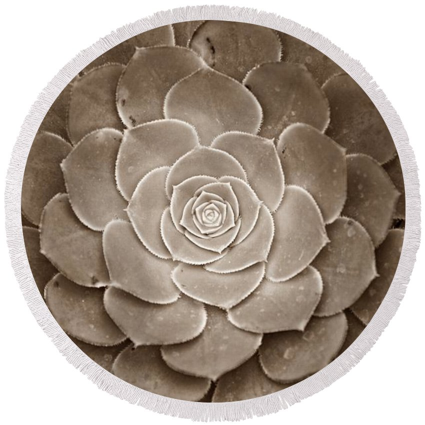 Cactus Round Beach Towel featuring the photograph Cactus 18 Sepia by Cassie Marie Photography