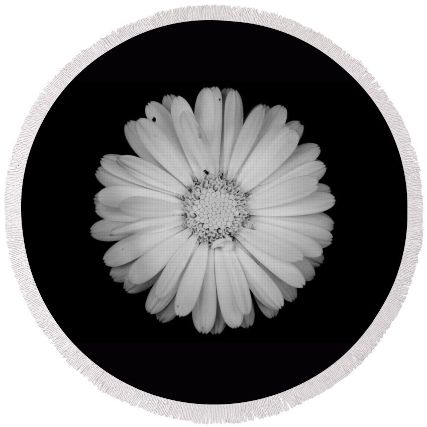 Calendula Round Beach Towel featuring the photograph Calendula Flower - Black And White by Laura Melis