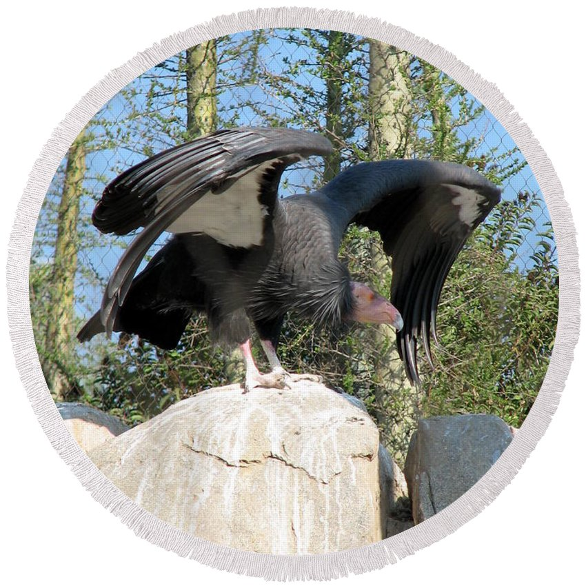 Condor Round Beach Towel featuring the photograph California Condor by Carla Parris
