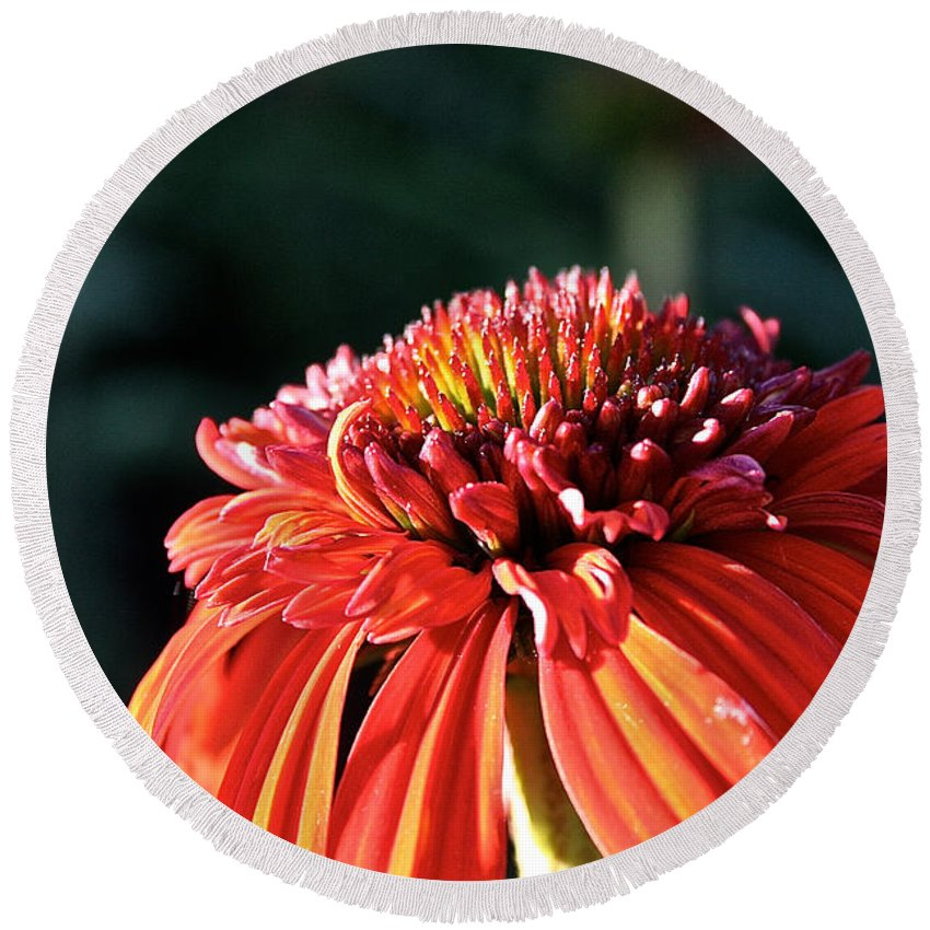 Outdoors Round Beach Towel featuring the photograph Candy Corn Cone Flower by Susan Herber