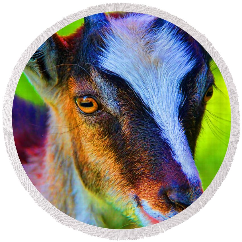 Candy Goat Round Beach Towel featuring the photograph Candy Goat by Mariola Bitner