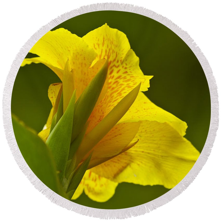 Nature Round Beach Towel featuring the photograph Canna Lily by Heiko Koehrer-Wagner