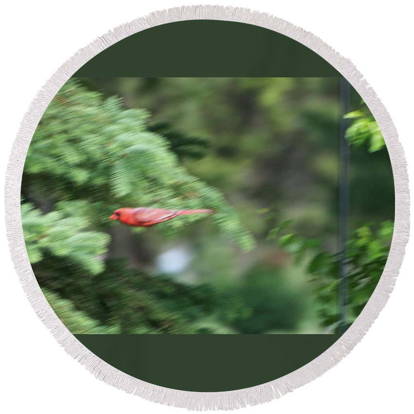 Animals Round Beach Towel featuring the photograph Cardinal In Flight by Thomas Woolworth