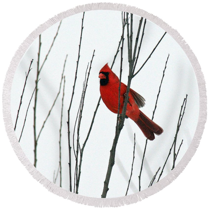 Cardinal Round Beach Towel featuring the photograph Cardinal In Willow by Crystal Heitzman Renskers