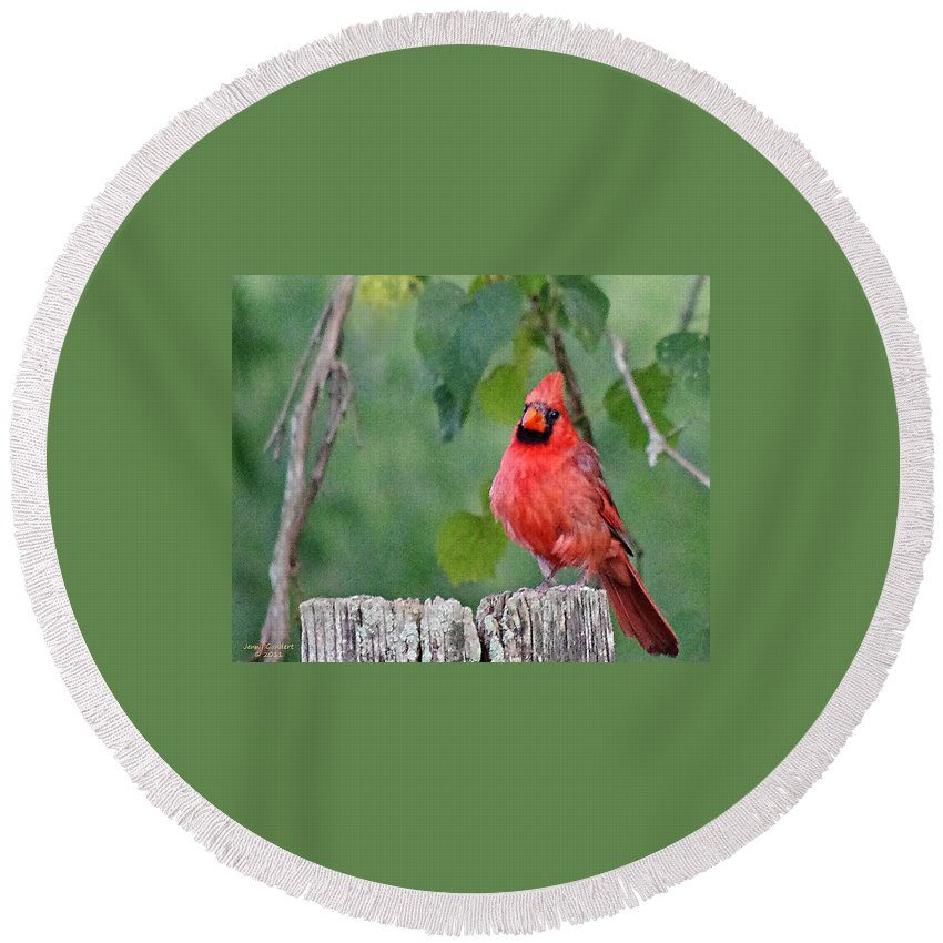 Digital Round Beach Towel featuring the photograph Cardinal Red by Jenny Gandert