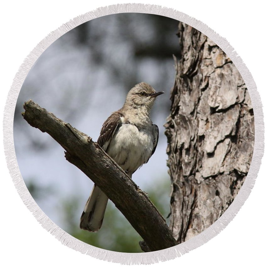 Northern Mockingbird Round Beach Towel featuring the photograph Caretaker by Travis Truelove