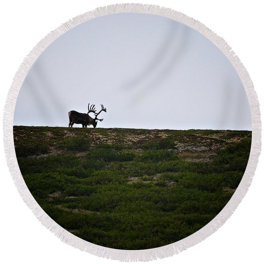 Caribou Round Beach Towel featuring the photograph Caribou Sighted by Eric Tressler