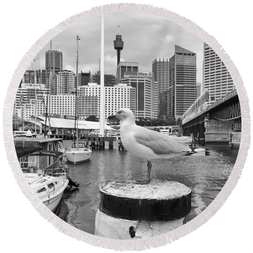 Seagull Round Beach Towel featuring the photograph Center Of Attention by Douglas Barnard