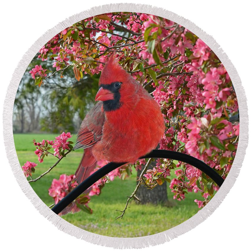 Nature Round Beach Towel featuring the photograph Cherry Blossom Cardinal by Debbie Portwood