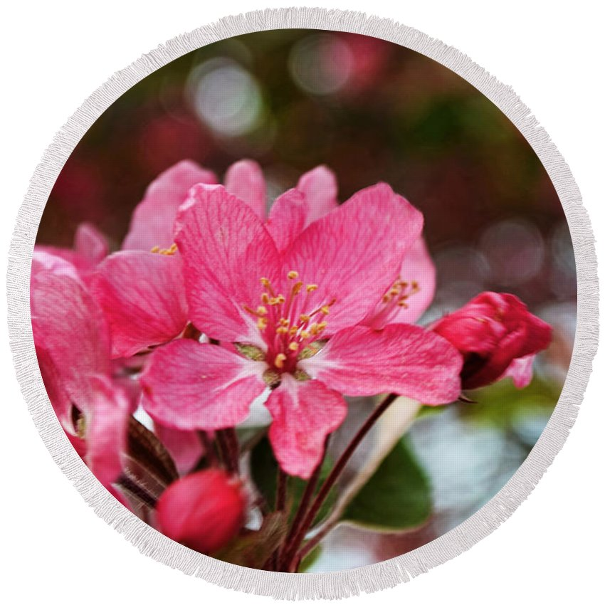 Nature Round Beach Towel featuring the photograph Cherry Blossom Greeting Card Blank With Decorations by Debbie Portwood