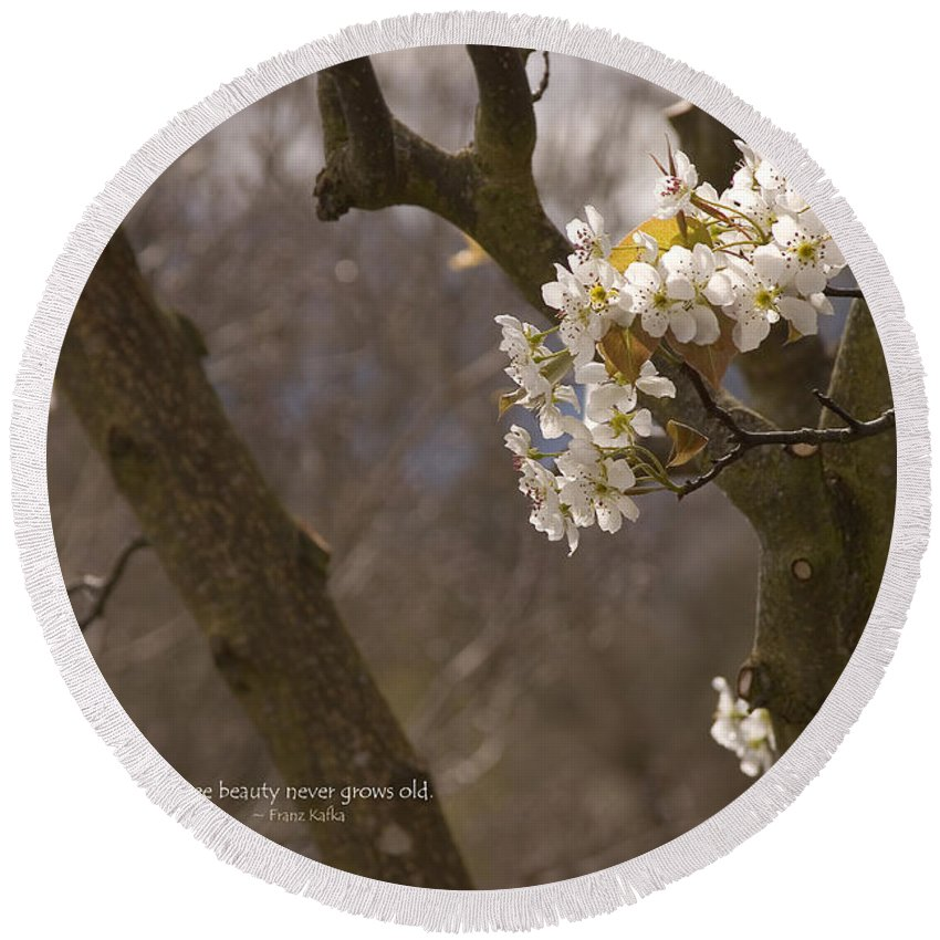 Cherry Round Beach Towel featuring the photograph Cherry Blossoms by Mick Anderson
