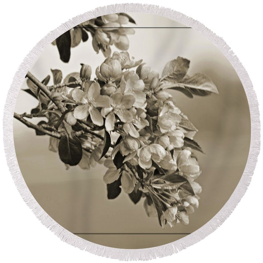 Nature Round Beach Towel featuring the photograph Cherry Blossoms Sepia by Debbie Portwood