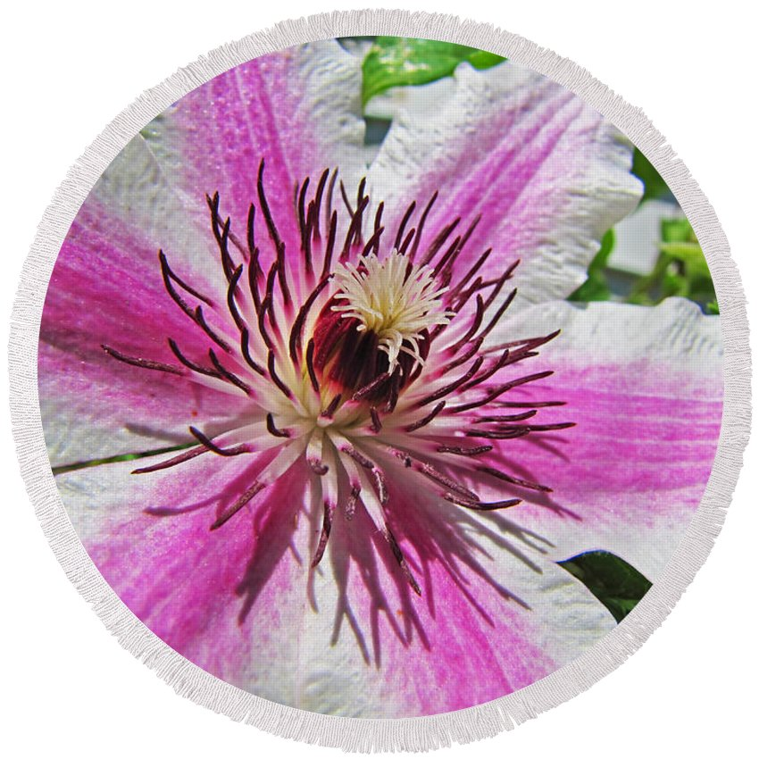 Nature Round Beach Towel featuring the photograph Clematis II by Debbie Portwood