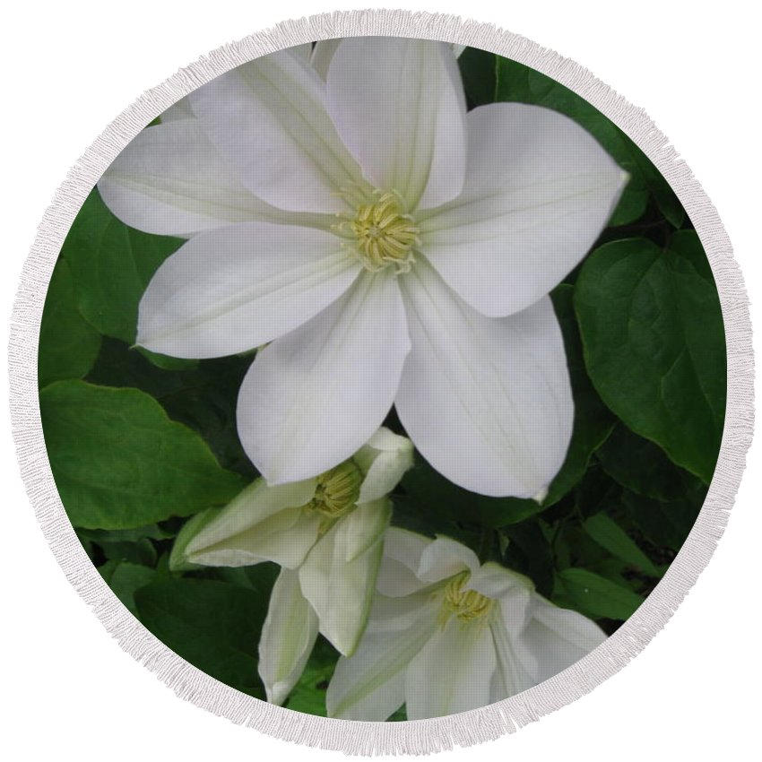 Clematis Round Beach Towel featuring the photograph Clematis Trio by Nancy Patterson