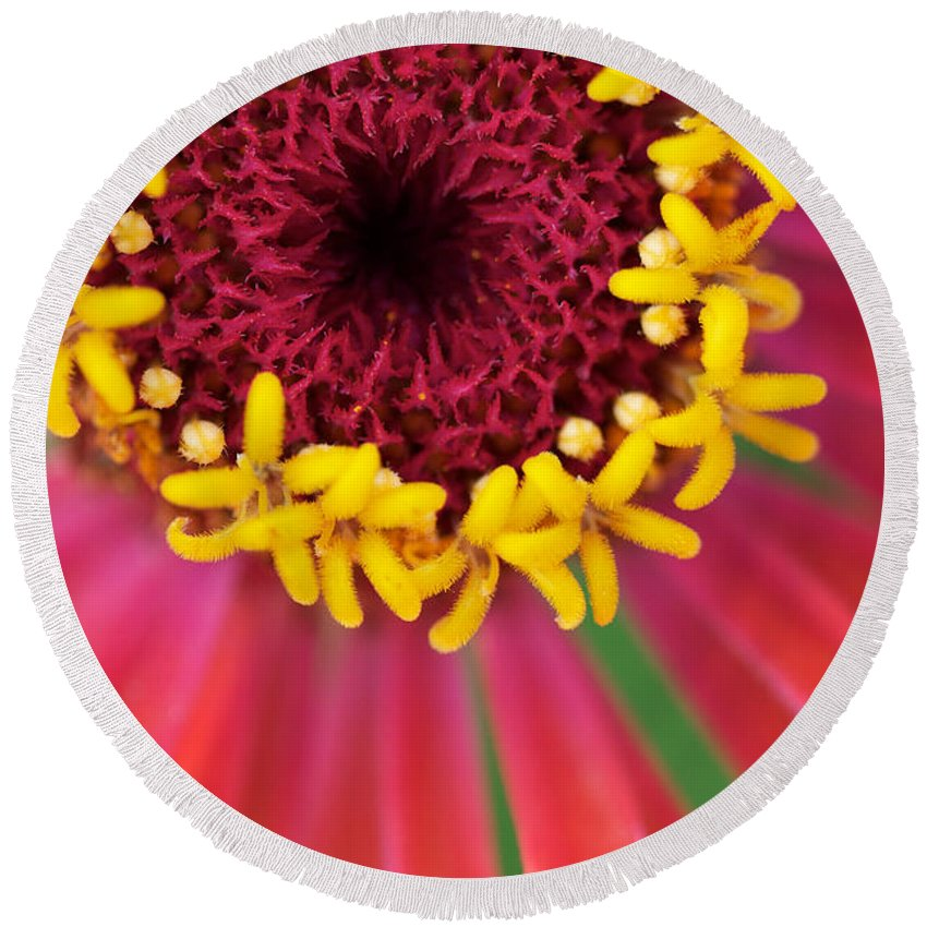 Round Beach Towel featuring the photograph Close Up Dahlia by Brooke Roby