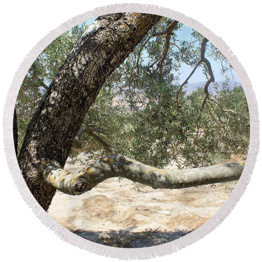 Closeup Round Beach Towel featuring the photograph Close Up Olive Tree by Munir Alawi