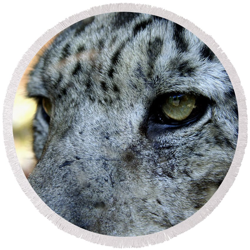 Leopard Round Beach Towel featuring the photograph Clouded Leopard Face by Heather Lennox