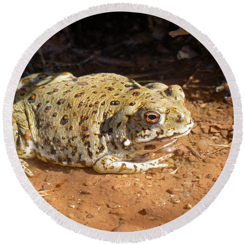 Colorado River Toad Round Beach Towel featuring the photograph Colorado River Toad by Randall Ingalls
