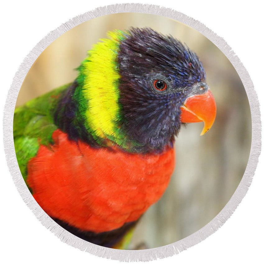 Lorikeet Round Beach Towel featuring the photograph Colorful Lorikeet Parrot by Terry Fleckney