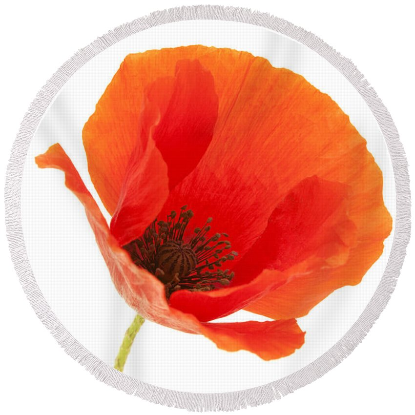 White Background Round Beach Towel featuring the photograph Common Poppy Flower by Fabrizio Troiani