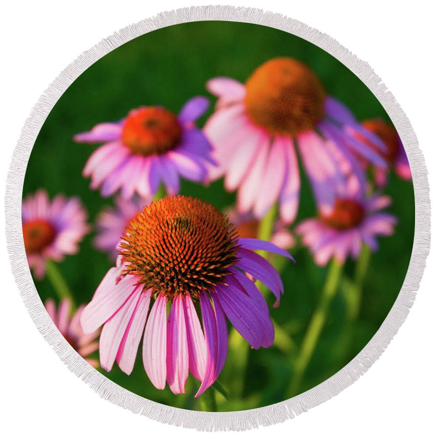 Cone Flower Round Beach Towel featuring the photograph Cones by Steve Stuller