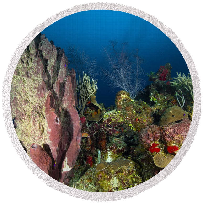 Sea Life Round Beach Towel featuring the photograph Coral Reef And Sponges, Belize by Todd Winner