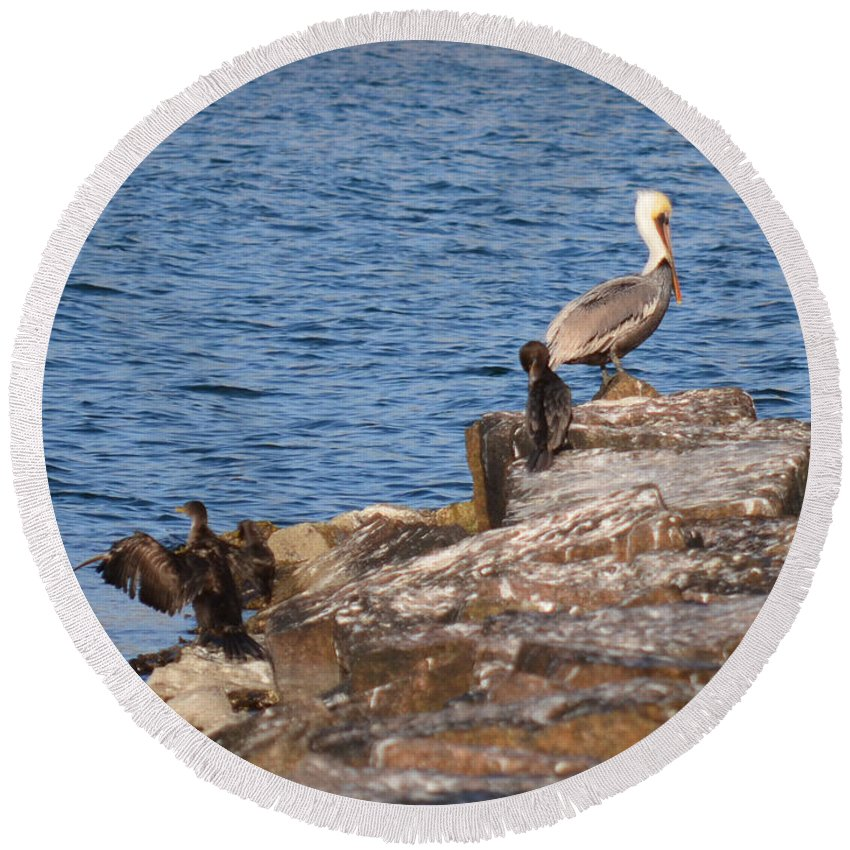Birds Round Beach Towel featuring the photograph Cormorants And Pelican by Donna Brown