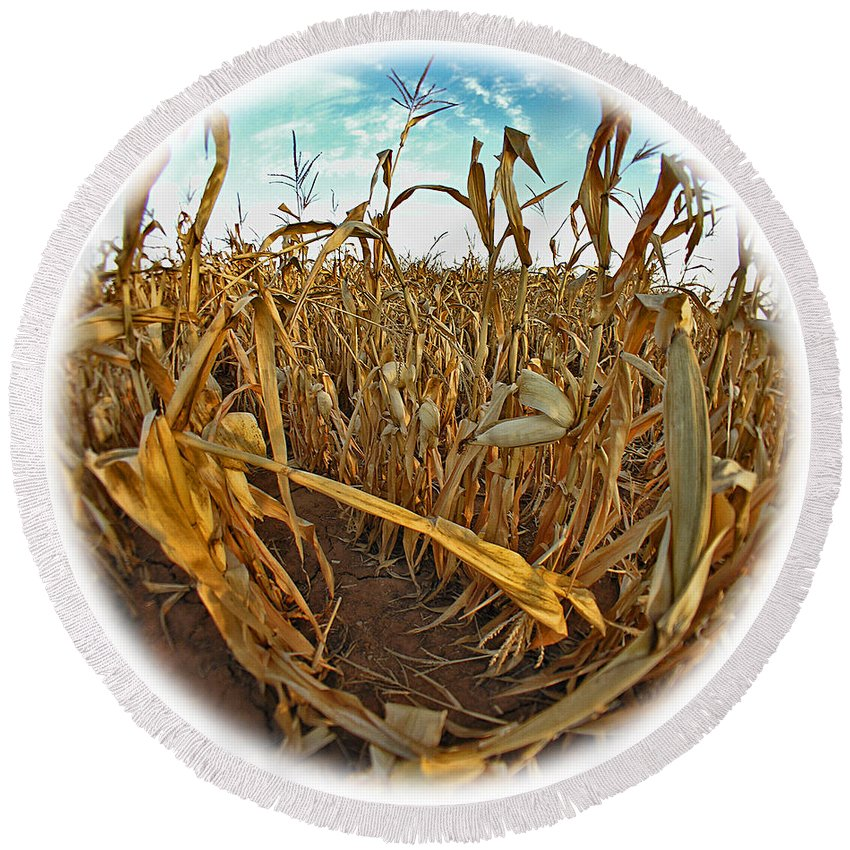 Cornfield Round Beach Towel featuring the photograph Cornfield by Peggy Starks
