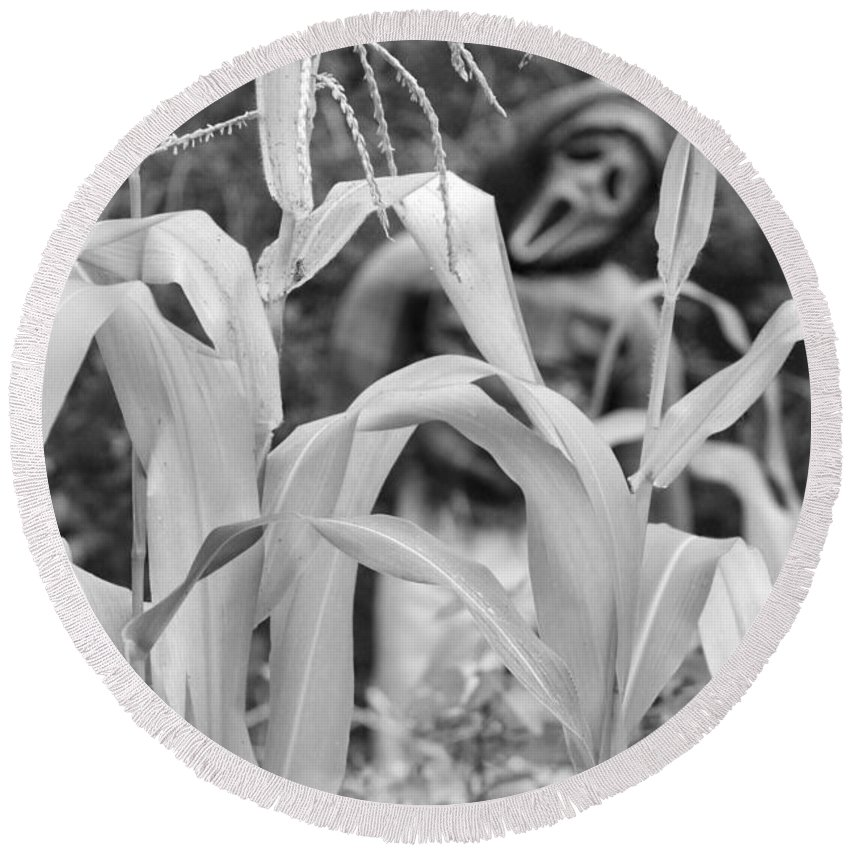 Garden Round Beach Towel featuring the photograph Cornstalks Black And White by James BO Insogna