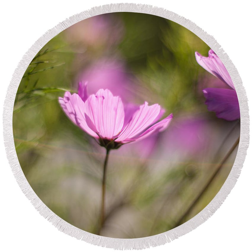 Flower Round Beach Towel featuring the photograph Cosmos Light by Mike Reid