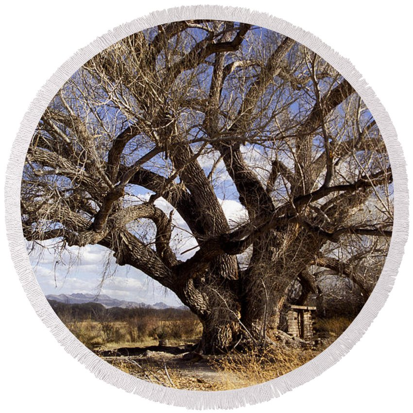 Trees Round Beach Towel featuring the photograph Cottonwood Tree At San Pedro House by Kathy McClure