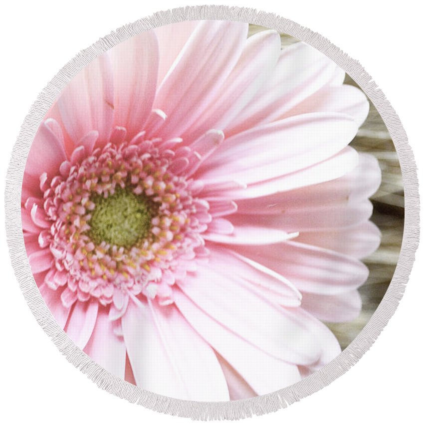 Gerber Daisy Round Beach Towel featuring the photograph Country Pink by Traci Cottingham