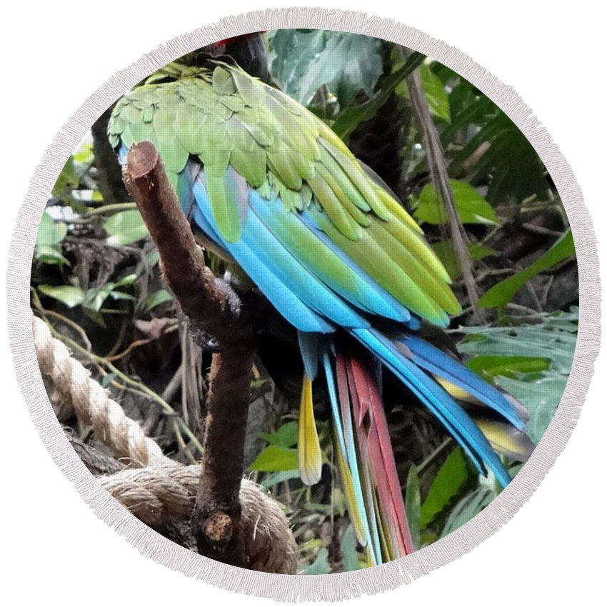 Green Round Beach Towel featuring the photograph Coy Parrot by Kevin Fortier