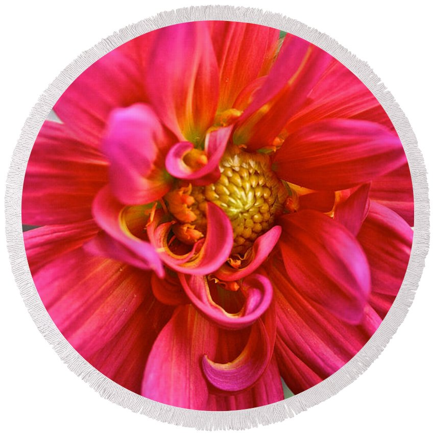 Garden Round Beach Towel featuring the photograph Curly Dahlia by Susan Herber