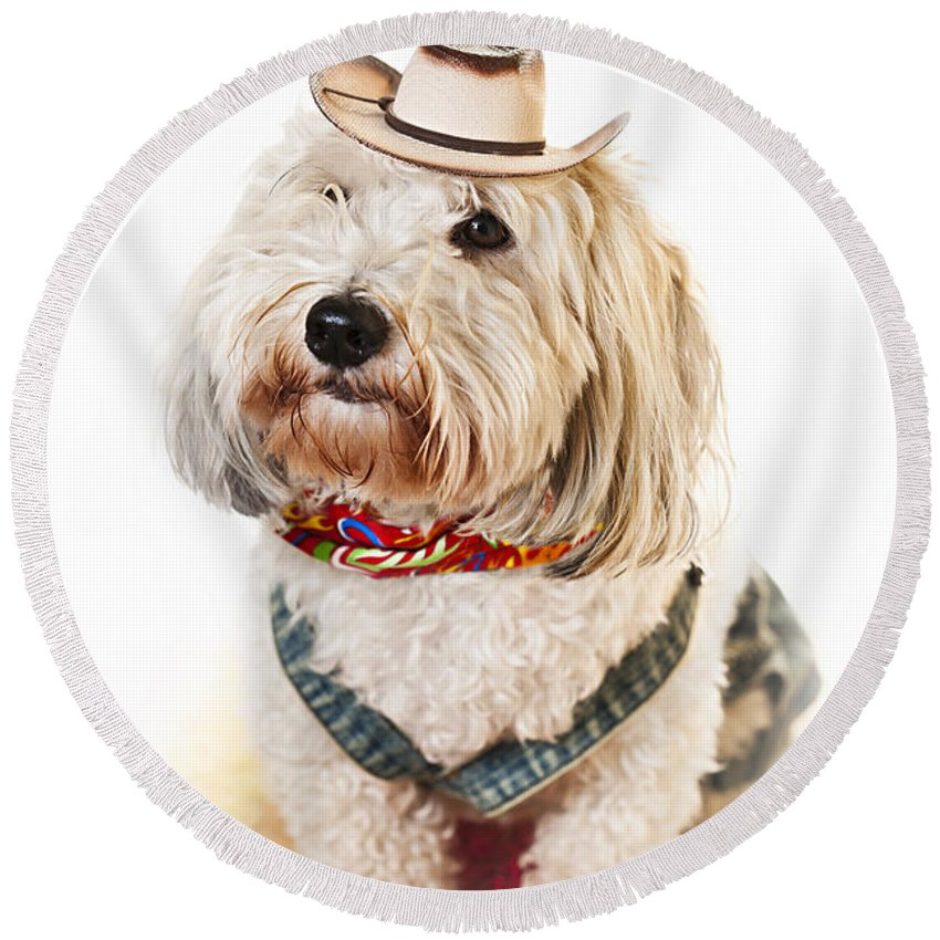 Dog Round Beach Towel featuring the photograph Cute Dog In Halloween Cowboy Costume by Elena Elisseeva