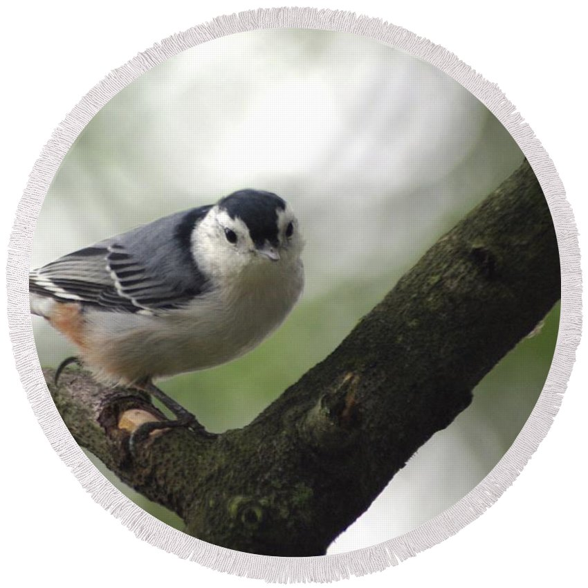 Birds Round Beach Towel featuring the photograph Cute Face Nuthatch by Living Color Photography Lorraine Lynch