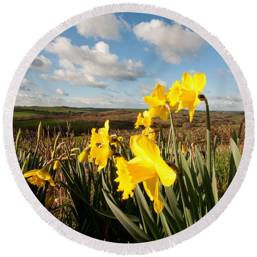 Daffodils Round Beach Towel featuring the photograph Daffs On Dartmoor by Rob Hawkins