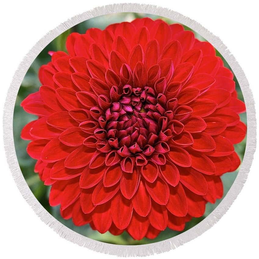 Landscape Round Beach Towel featuring the photograph Dahlia 4001 by Susan Herber