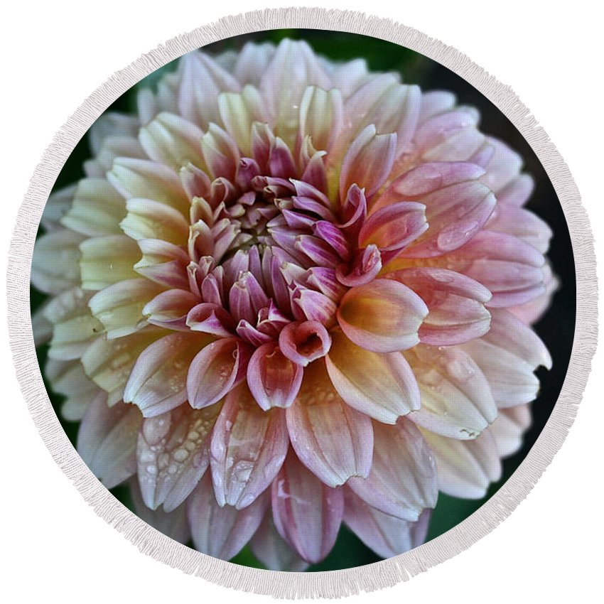 Plant Round Beach Towel featuring the photograph Dahlia Dewdrops by Susan Herber