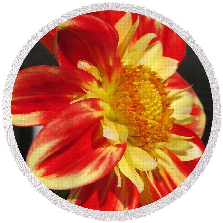 Dahlia Round Beach Towel featuring the photograph Dahlia Named Pooh by J McCombie
