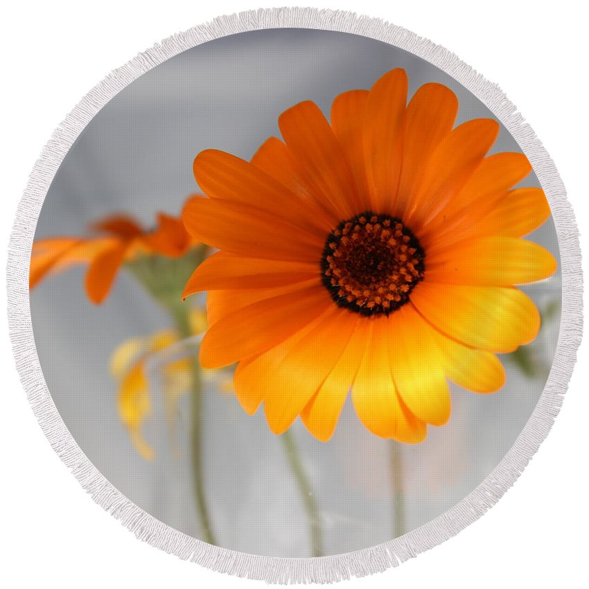 Floral Round Beach Towel featuring the photograph Daisies 4 by Kume Bryant