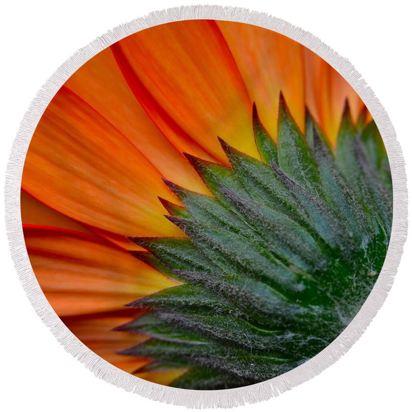Daisy Round Beach Towel featuring the photograph Daisy Delight by Frozen in Time Fine Art Photography