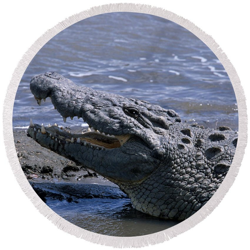 Crocodile Round Beach Towel featuring the photograph Danger On The Mara River by Sandra Bronstein