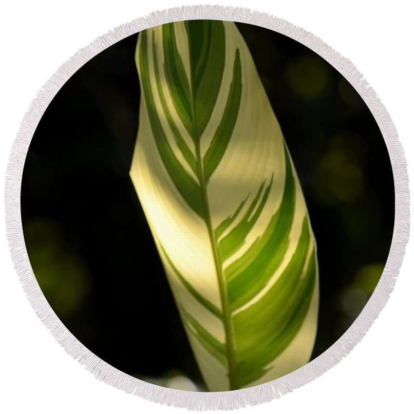 Dappled Round Beach Towel featuring the photograph Dappled Ginger Leaf by Maria Urso