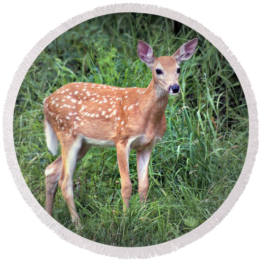 Deer Round Beach Towel featuring the photograph Darling Fawn by Marty Koch
