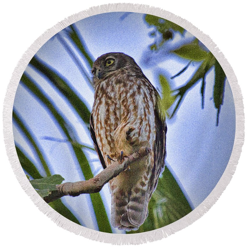 Barking Owl Round Beach Towel featuring the photograph Daylight Shy V2 by Douglas Barnard