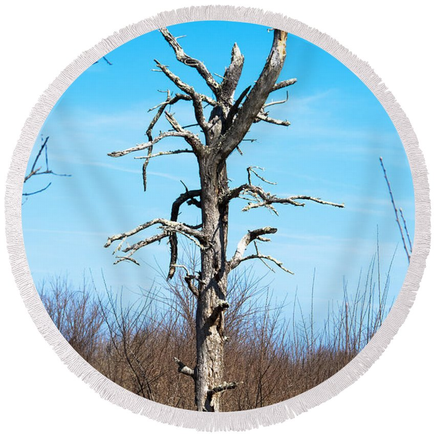 Tree Round Beach Towel featuring the photograph Deadwood by Steven Natanson