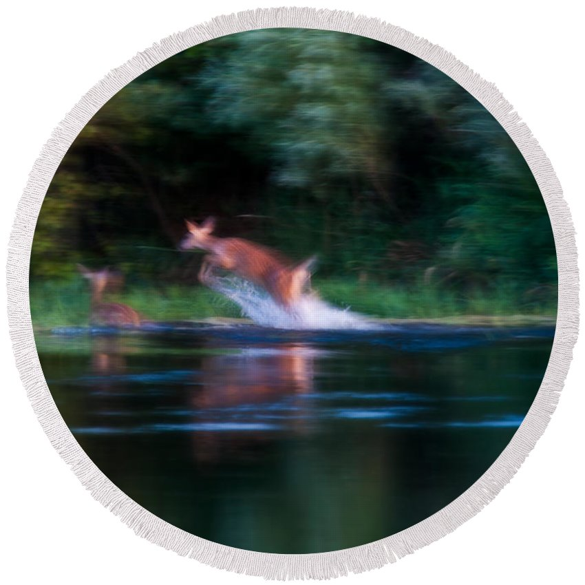 Heron Haven Round Beach Towel featuring the photograph Deer Splash by Edward Peterson